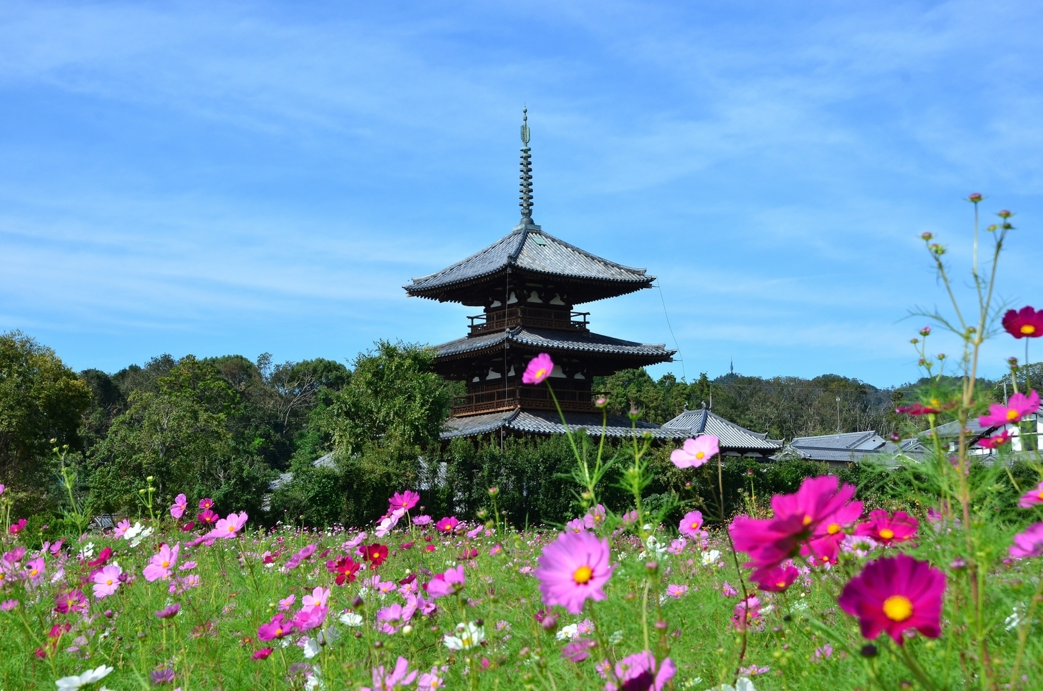 3 Places to visit in Nara